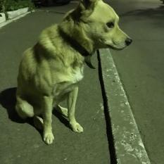 Найден пёс район метро Голосеевская