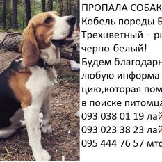 Потерялся Бигль - Яблоновка