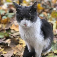 Найден кот Одесса