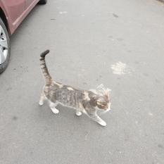На углу ул. Ярославская и Почайнинская ходит потерянный котик !!!