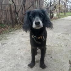 Срочно(!) о потерянной домашней собаке.