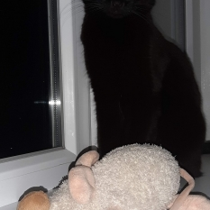 Пропал котик