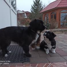 Подарю щенка