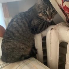пропала кошка киев лукьяновка