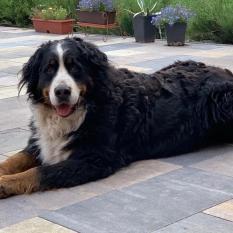 Пропала собака Виноградарь