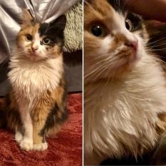 Найдена кошка Харьков, ул. Ковтуна (р-н парка Артема)