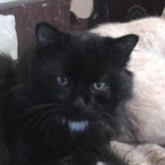 Пропал котик Пулька