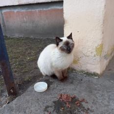 Найдена кошка или кот Оболонь