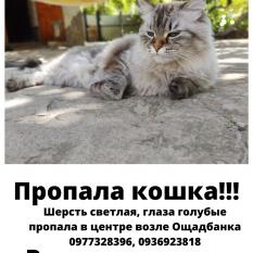 Пропала кошка Невская маскарадная